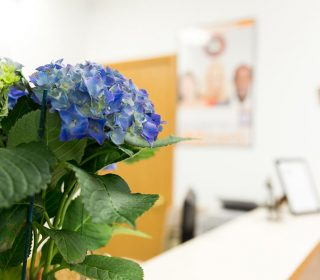 Flower design at the West Liberty, IA and Muscatine, IA Dental Offices | Gentle Family Dentists